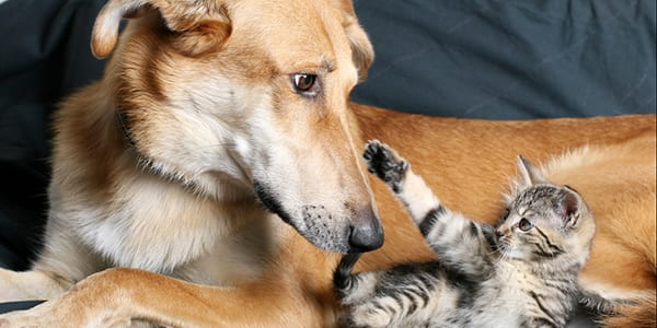 Cat and Dog Vaccinations in Wicker Park: Dog and Kitten on Couch